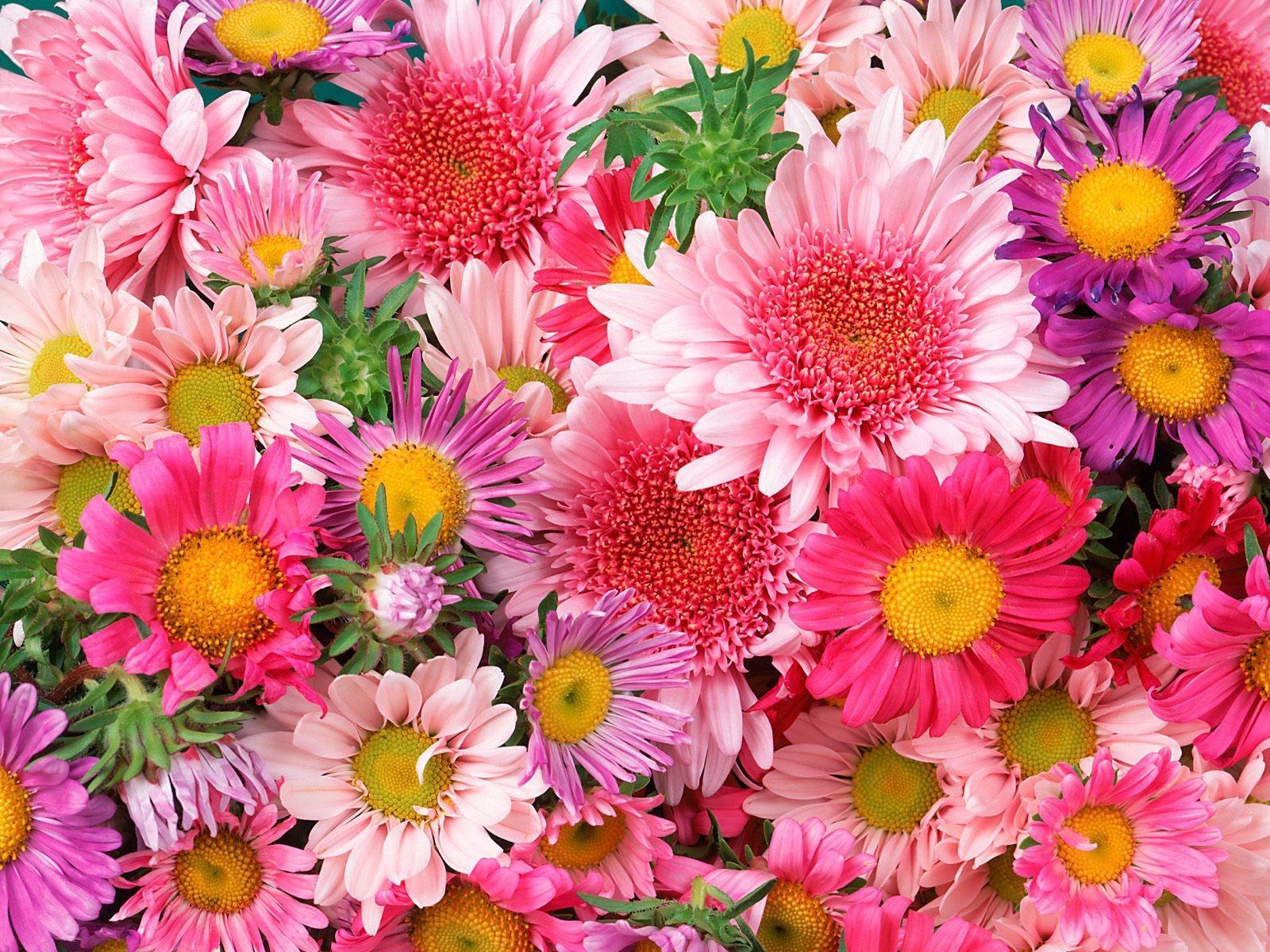 Magnifique fond d'écran de fleurs